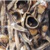 Buy shrooms online – buy shrooms uk – buy portobello mushroom – buy portobello mushroom online.