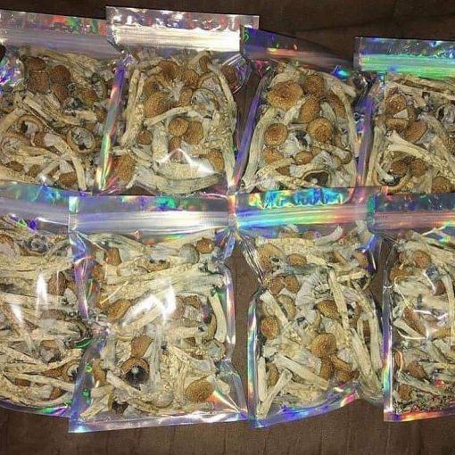 Golden cap mushrooms